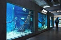 BH Aquarium